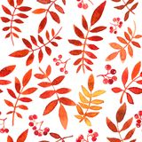 Vector seamless pattern with red leaves Royalty Free Stock Photo