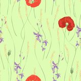 Vector seamless pattern with red poppies, white daisies, blue cornflowers and ears of wheat. On a green background Stock Photo