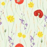 Vector seamless pattern with red poppies, white daisies, blue cornflowers and ears of wheat. On a green background Royalty Free Stock Images