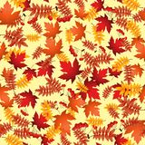 Vector seamless pattern with red and yellow autumn leaves Royalty Free Stock Photography