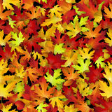 Vector seamless pattern with red and yellow autumn leaves Stock Photos