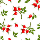 Vector seamless pattern with rosehip berries. Vector illustration. Royalty Free Stock Images