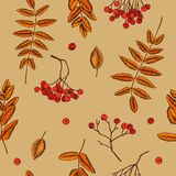 Vector seamless pattern of rowan berries. Hand drawn vector illustration stock illustration