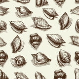 Vector seamless pattern sketch of seashells isolated on white background. Hand-drawn sea animals. Stock Photo