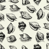 Vector seamless pattern. sketch of seashells isolated on white background. Hand-drawn sea animals. Stock Images