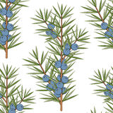 Vector seamless pattern with a sprig of juniper. royalty free illustration