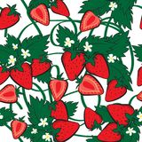 Vector seamless pattern with Strawberries. And leaves. Perfect for fabric, textile, wrapping paper and other decoration, Vector illustration Stock Photography