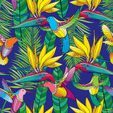 Vector seamless pattern with Strelitzia reginae and colorful flying Hummingbird or Colibri in contour style on the blue background. Exotic tropical flower Royalty Free Stock Photo