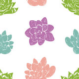 Vector seamless pattern with succulent cactus. Stock Images
