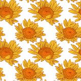 Vector seamless pattern with sunflowers Royalty Free Stock Photography