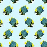 Vector seamless pattern from swim fish. Emperor angelfish Royalty Free Stock Photos