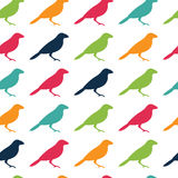 Vector seamless pattern texture with birds Royalty Free Stock Photography