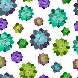 Vector seamless pattern, texture, paper with succulents with transparent background. Trendy elements. stock illustration