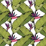 Vector seamless pattern with tropical leaves and flowers. Hand drawing. Decorative background for design Royalty Free Stock Photography