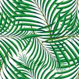 Vector seamless pattern of tropical palm leaves isolated on white background. Vector illustration in hand drawn cartoon style. Can be used for printing on Royalty Free Stock Image