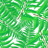 Vector seamless pattern of tropical palm leaves isolated on white background. Vector illustration in hand drawn cartoon style. Can be used for printing on Royalty Free Stock Images
