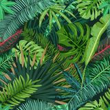 Vector seamless pattern with tropical palm leaves. Summer design for fashion textile prints and greeting cards. Vector seamless pattern with green tropical palm Stock Photography