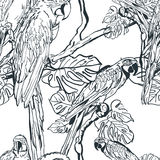 Vector seamless pattern with tropical parrot birds on tree. Hand drawn black and white illustration of jungle. Stock Photos