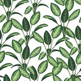 Vector seamless pattern of tropical plants on white background stock illustration