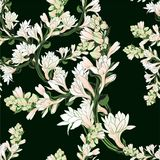 Vector seamless pattern. Tuberose - branches. Medicinal, perfumery and cosmetic plants. Wallpaper. Use printed mater. Ials, signs, posters, postcards, packaging Royalty Free Stock Photos