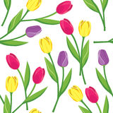 Vector seamless pattern with tulips Stock Image