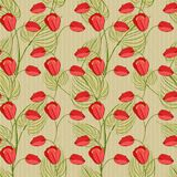 Vector seamless pattern with tulips and leaves Stock Image