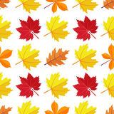 Vector seamless pattern with various colorful autumn leaves on a white background. Seamless pattern with various colorful autumn leaves on a white background Vector Illustration