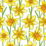Vector seamless pattern with Vector seamless pattern with outline narcissus or daffodil flower in orange and yellow. Stock Photo