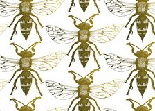 Vector seamless pattern with wasps. Vector entomological macro drawn seamless pattern with golden wasp. Sketched element background can be used as a texture for royalty free illustration