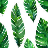 Vector seamless pattern with watercolor green leaves Stock Photos