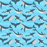 Vector seamless pattern with whale in ocean waves Stock Photography