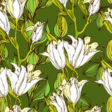 Vector seamless pattern with white lily flowers Royalty Free Stock Images