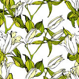 Vector seamless pattern with white lily flowers Stock Image