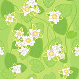 vector Seamless pattern of white lotus Stock Images
