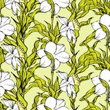 Vector seamless pattern with white narcissus Royalty Free Stock Photos