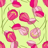 Vector Seamless Pattern With Tulips Royalty Free Stock Images