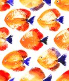 Vector Seamless Pattern With Watercolor Discus Fish Royalty Free Stock Photography