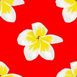 Vector Seamless of Plumeria White, Frangipini on Red Background vector illustration