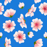 Vector seamless sakura blue pattern Stock Images