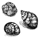 Vector seamless sketch of seashells isolated on white background. Royalty Free Stock Photos