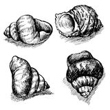 Vector seamless sketch of seashells isolated on white background. Stock Photography