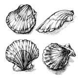 Vector seamless sketch of seashells isolated on white background. Royalty Free Stock Photo