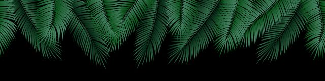 Vector seamless summer palm leaves on black background. Vector seamless summer palm leaves on black background vector illustration