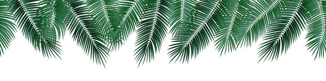 Vector seamless summer palm leaves on white background. Vector seamless summer palm leaves on white background stock illustration