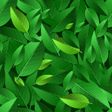 Vector seamless summer pattern with green leaves. Nature ecology Stock Photography