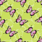 Vector seamless texture with butterflies. Stock Images
