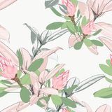 Vector seamless tropical pattern, vivid tropic foliage, with pink protea flower  in bloom. Vector seamless tropical pattern, vivid tropic foliage, with ficus Stock Photography