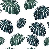 Vector seamless tropical pattern, vivid tropic foliage, with monstera leaves. White background. Vintage style royalty free illustration
