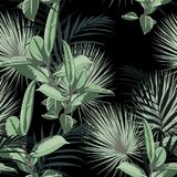 Vector seamless tropical pattern, vivid tropic foliage, with palm leaves and greenery ficus elastica. Modern bright summer print design. Black background vector illustration