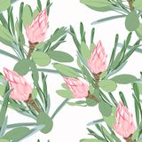 Vector seamless tropical pattern, vivid tropic foliage, with pink protea flower in bloom. Modern bright summer print design. royalty free illustration